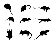 Set Of Black Silhouette Rat Icon, Isolated Vector On White Backg