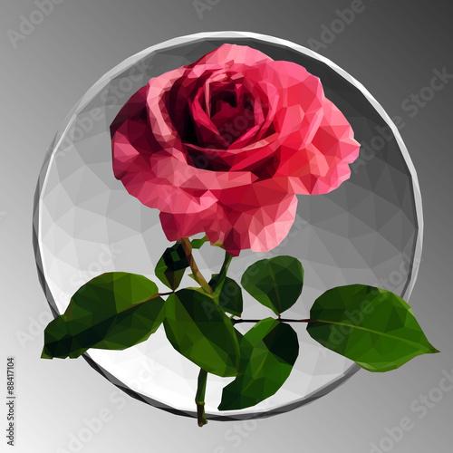 rozowa-roza-na-szarym-tle-ilustracja