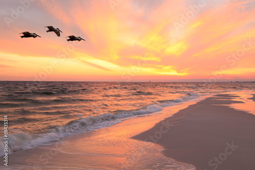 Staande foto Strand Pelicans Fly Over the Beach as the Sun Sets