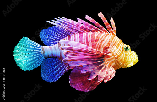 Wall Murals Under water Pterois volitans, Lionfish - Isolated on black