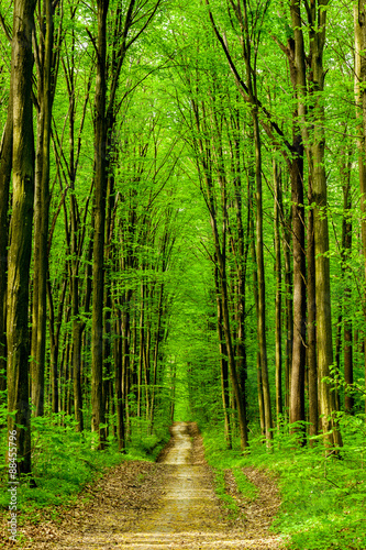 Photo Stands Road in forest forest trees.