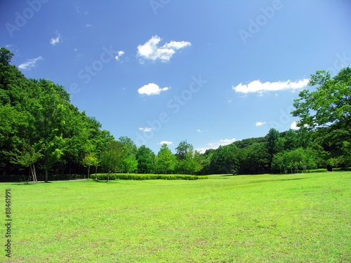 Canvastavla 初夏の草原と林風景
