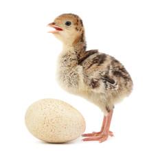 Chicken Turkey