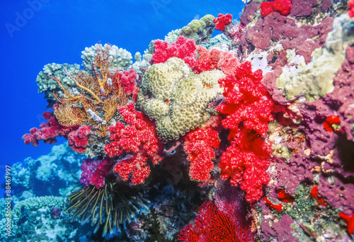Fotografia, Obraz dendronephthya soft corals