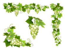 A Set Of Bunches Of White Grapes. Cluster Of Berries, Branches And Leaves. Vector Illustration.