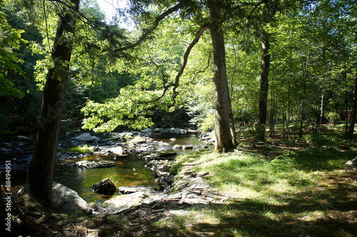 Cuadros en Lienzo Peaceful brook or small river surrounded by green trees on a sunny summer day in rural area of the Poconos, in PA, United States