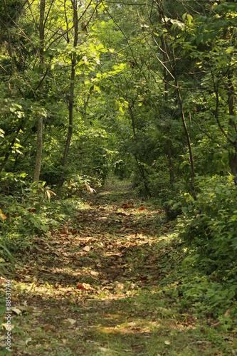 Tuinposter Weg in bos 森の中の道