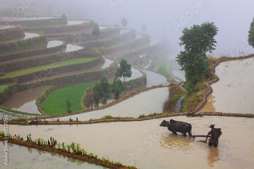 Asian farmer working on terraced rice field
