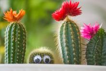 Hidden Funny Cactus