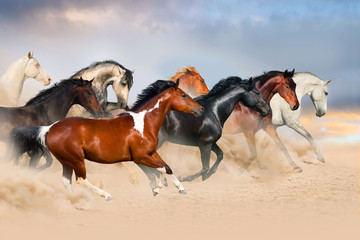 Horse herd run gallop in desert at sunset