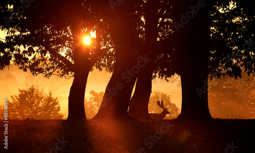 Foto op Aluminium Koraal A fallow deer in the shadows