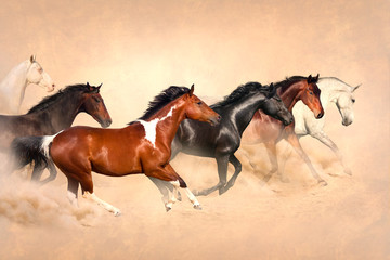 FototapetaHorse herd run gallop in desert at sunset