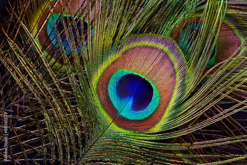 Foto op Aluminium Pauw Peacock feather (detail of eyespot)
