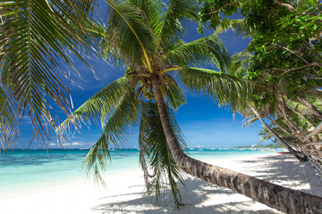 Palm on white beach, Boracay island