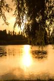 Fototapeta Krajobraz - Public park in Ferrara city with a lake during a sunny day