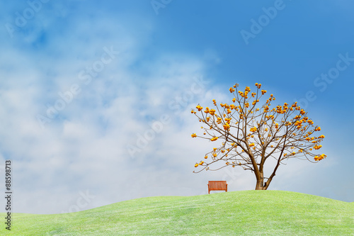 Spoed Foto op Canvas Heuvel Yellow flower tree on green hill
