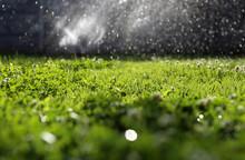 Clover Field / Watering Clover Garden