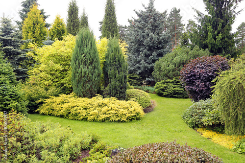 Fotografering beautiful garden landscape with variety of conifers and other pl