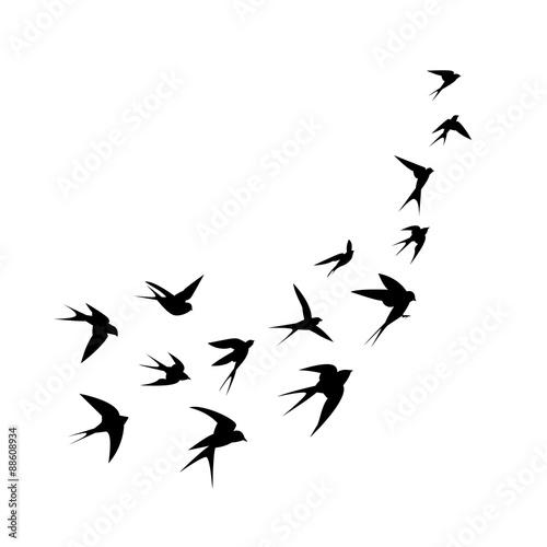 stado-latajacych-jaskolek-na-bialym-tle