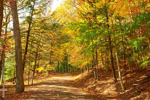 Foto op Canvas Weg in bos Autumn scene