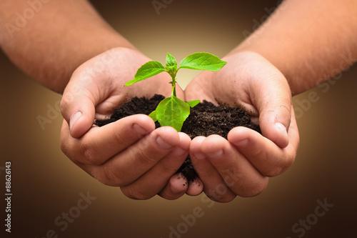 Papiers peints Vegetal Green plant in a child hands