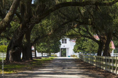 Photo  southern plantation