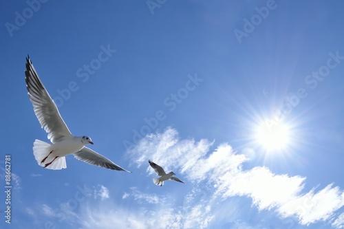 Foto op Aluminium Vogel 青色の空を飛ぶ白色の鳥