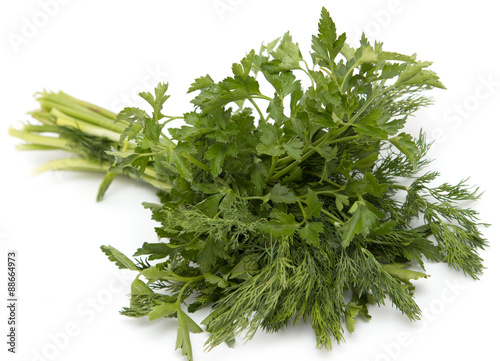 Garden Poster Plant dill and parsley on a white background