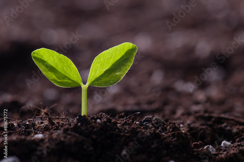 Fotografía  新緑の新芽