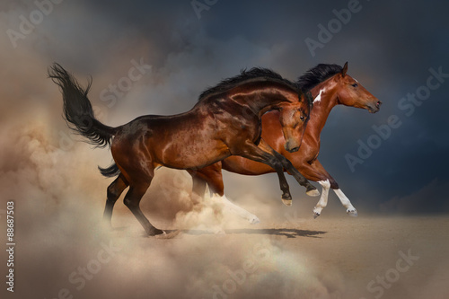 Photo  Pinto and bay horse run gallop in sand dust