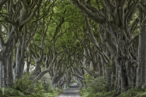 Keuken foto achterwand Noord Europa Irland Dark Hedges