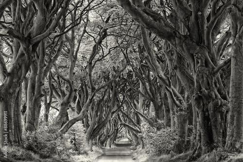 Irland Dark Hedges sw