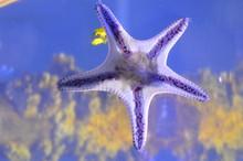 The Underside Of A Purple Starfish
