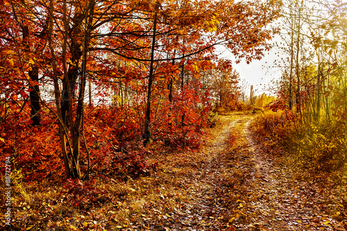 Fototapety, obrazy: Autumn background