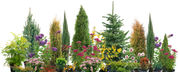 Composition of shrubs