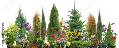 Fototapeta Composition of shrubs obraz