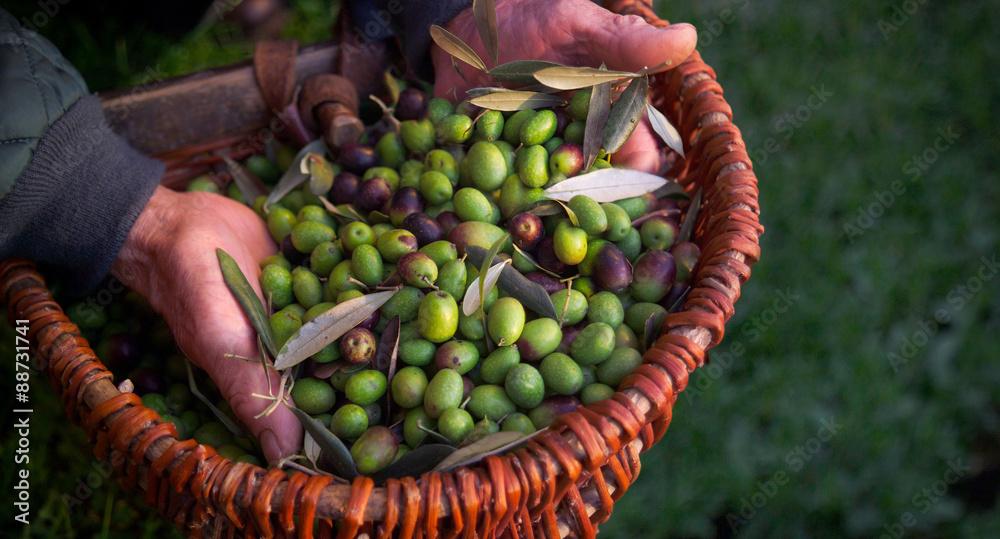 Fototapety, obrazy: olives