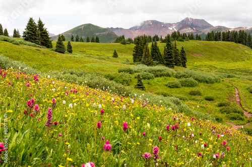 Colorado trail through wildflower filled meadow with mountains in the distance - 88771741