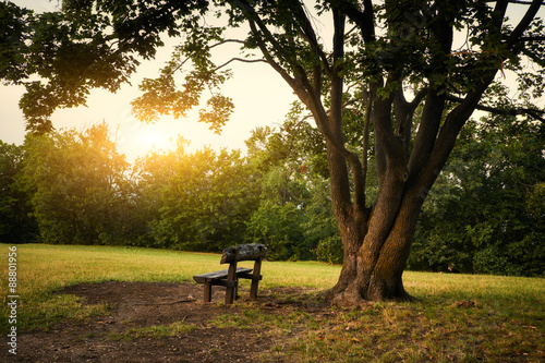 Canvas Print Bench in a park