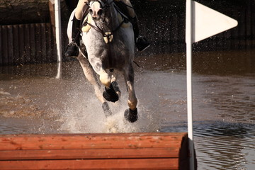 Horse at water jump.