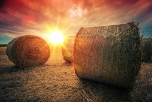 Baled Hay Rolls At Sunset
