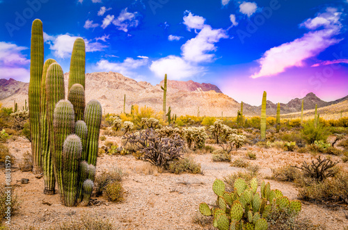Spoed Foto op Canvas Arizona Arizona Desert Ladscape