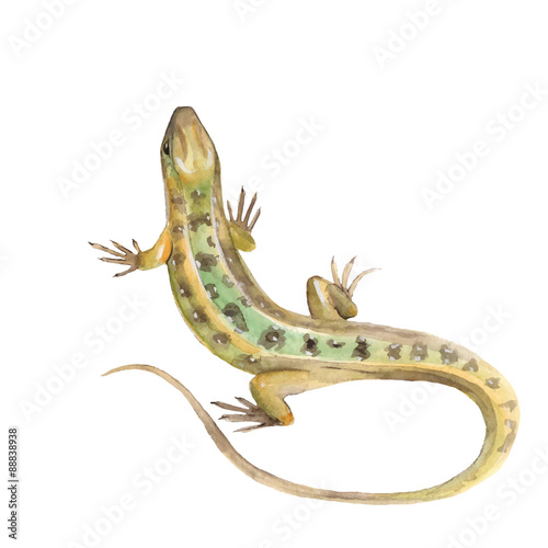 Fotomural Lizard. Watercolor illustration in vector