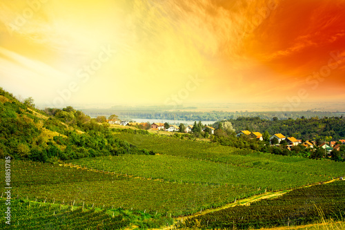 Poster Zwavel geel view to vineyard