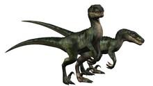 Two Velociraptors Dinosaurs - ...