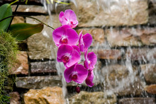 Purple Orchids At The Daniel Stowe Botanical Gardens With Water Falling Behind