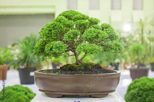 Bonsai tree Bonsai Exhibition