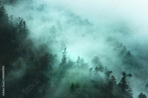 Fotografía misty forest landscape in the mountains