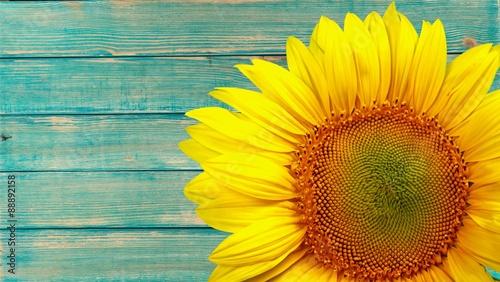 In de dag Zonnebloem Sunflower.