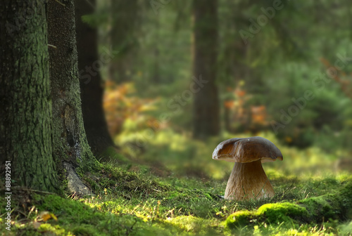 Photo  Boletus mushroom in forest